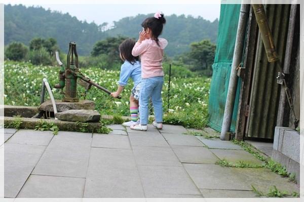 2013單寧女孩在竹子湖芋見愛‧情 (264).JPG