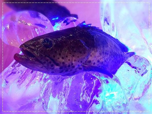 ﹝活動﹞2015年全國優質石斑魚頒獎典禮。認識冷凍石斑&在地好漁民 (34).jpg