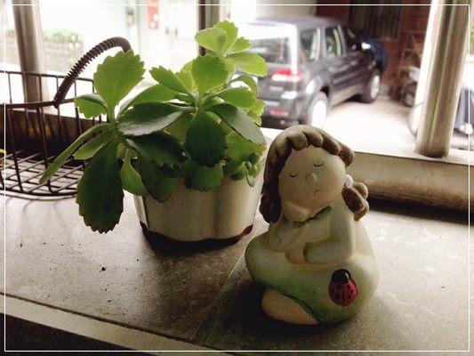【小猴媽❤大創】園藝小物。手指頭由黑轉綠就靠它們了!! (23).jpg
