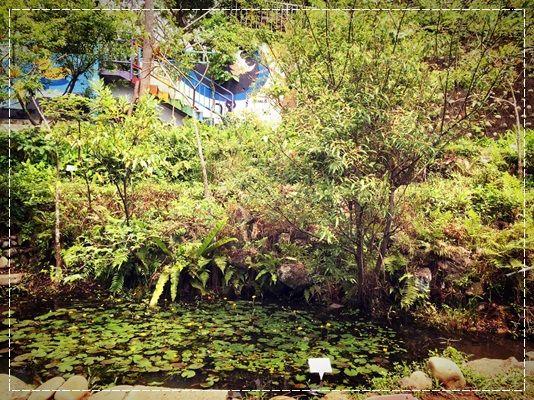 安娜愛運動✿‿✿就是要當野孩子FLYING KIDS 攀樹走繩林間逍遙遊&童軍雙溪山林冒險活動 (87).jpg