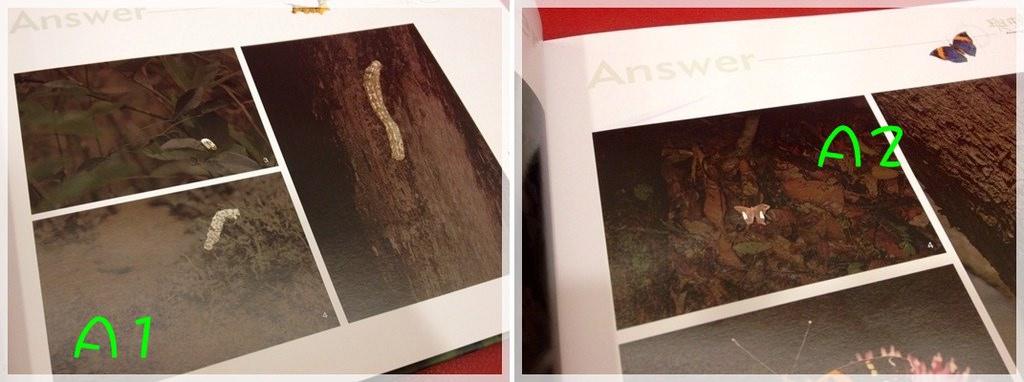 【推薦好書】兒童好奇心大百科&與大自然捉迷藏 (16)
