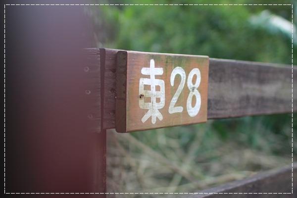 童子軍不露營怎麼叫做童子軍!@三峽皇后鎮森林... (10).JPG