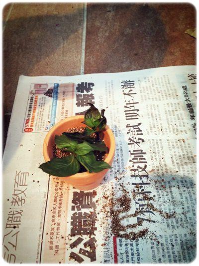 【小猴媽❤佈置】特力屋。樂園藝之CoolOne迷你樂活盆栽組 & LOFT底部防滑澆花器 (18).jpg