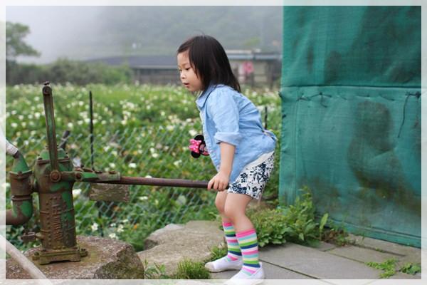 2013單寧女孩在竹子湖芋見愛‧情 (207).JPG