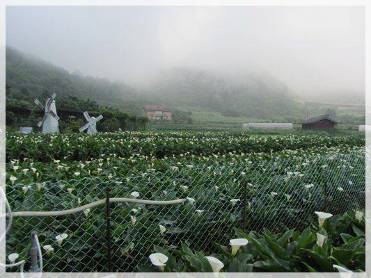 2013單寧女孩在竹子湖芋見愛‧情 (122).JPG