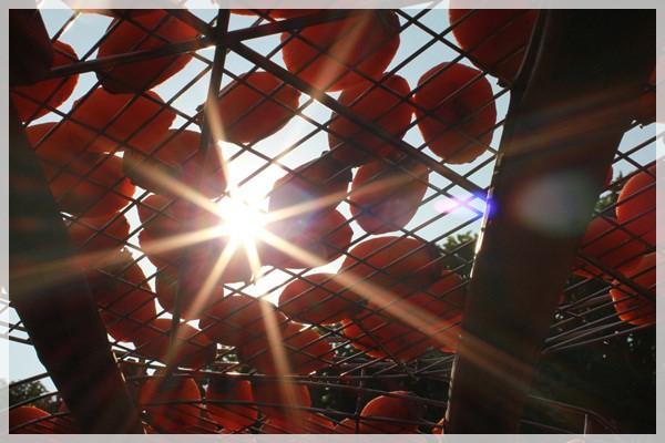 好久不見的金牛會2013年第二次合體企投@味衛佳柿餅觀光農場→金漢柿餅教育園區→金勇DIY休閒農場 (28)