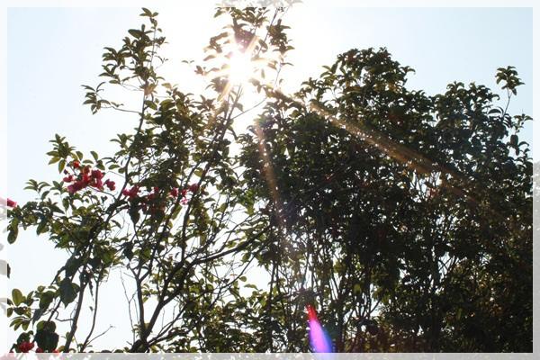 好久不見的金牛會2013年第二次合體企投@味衛佳柿餅觀光農場→金漢柿餅教育園區→金勇DIY休閒農場 (12)