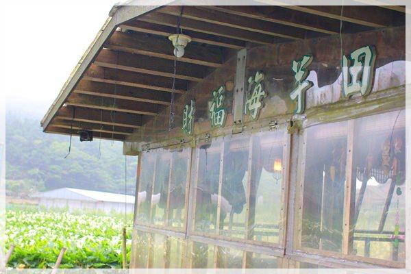 2013單寧女孩在竹子湖芋見愛‧情 (158).JPG