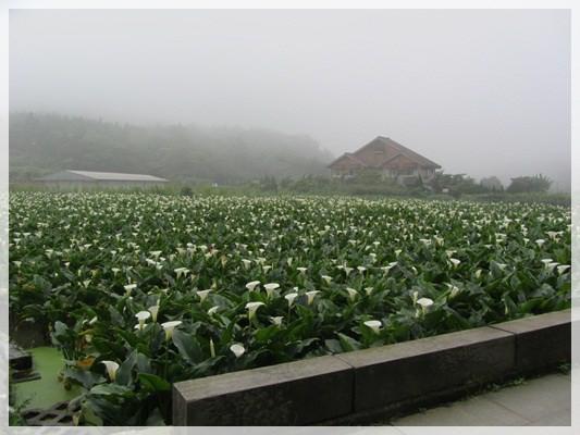 2013單寧女孩在竹子湖芋見愛‧情 (113).JPG