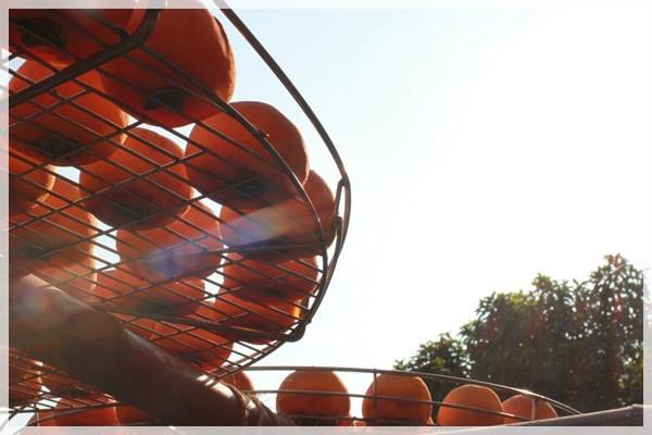 好久不見的金牛會2013年第二次合體企投@味衛佳柿餅觀光農場→金漢柿餅教育園區→金勇DIY休閒農場 (37)