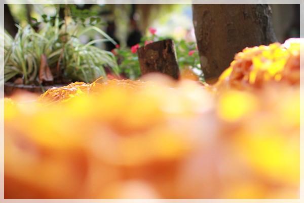 好久不見的金牛會2013年第二次合體企投@味衛佳柿餅觀光農場→金漢柿餅教育園區→金勇DIY休閒農場 (41)