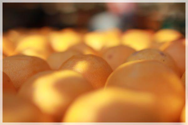 好久不見的金牛會2013年第二次合體企投@味衛佳柿餅觀光農場→金漢柿餅教育園區→金勇DIY休閒農場 (25)