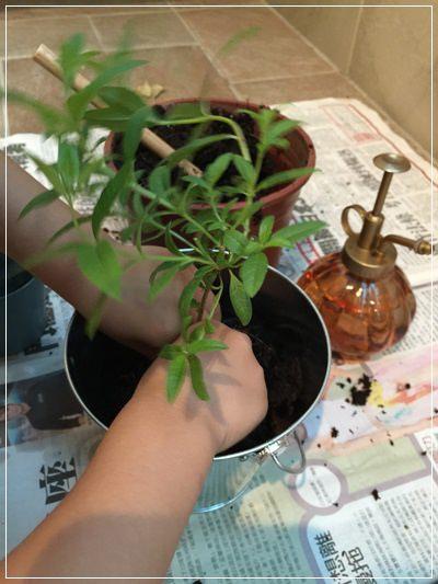 【小猴媽❤大創】園藝小物。手指頭由黑轉綠就靠它們了!! (11).JPG