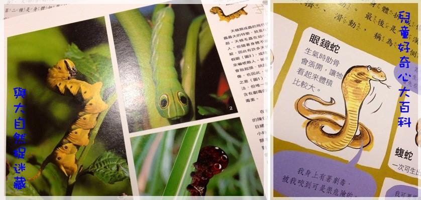 【推薦好書】兒童好奇心大百科&與大自然捉迷藏 (2)